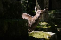 Oh, Hello Deer